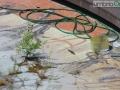 fontana-piazza-tacito-terni-corso_1193-FILEminimizer-affreschi-affresco