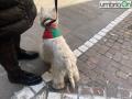 cane rossoverde Ternana