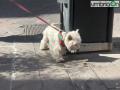 cane rossoverde Ternanaddfdf