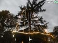 Cedro Cardeto 9 dicembre illuminato (FILEminimizer)