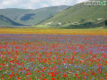 Castelluccio-fiorita-fioritura2-distesa-FILEminimizer