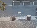 Degrado-sporcizia-piazza-dellOlmo-Terni-2-agosto-2020-3