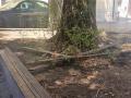 Degrado-sporcizia-piazza-dellOlmo-Terni-2-agosto-2020-4