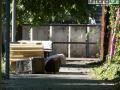 Ex Sim gatto Città Salute