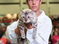 gatti bengala perugia campioni cannes