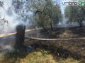 Colle-delloro-incendio-Terni3