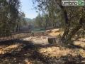 Colle-delloro-incendio-bosco-Terni-1