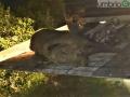 Incidente-mortale-Acquasparta-auto-cinghiale-18-settembre-2020-8