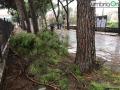Lungonera-Campofregoso-albero-ramo-maltempo-Terni
