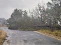 Maltempo albero caduto Collepaese Terni - 28 dicembre 2020