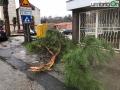 Via-Mozzoni-albero-maltempo-vento