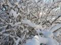 Foto Melissa Rosati Pian di Chiavano (Cascia) neve - gennaio 2021 (10)