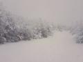 Foto Melissa Rosati Pian di Chiavano (Cascia) neve - gennaio 2021 (5)