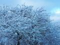 Foto Melissa Rosati Pian di Chiavano (Cascia) neve - gennaio 2021 (7)