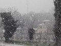 Neve 2 - 24 marzo 2020 (5)