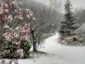 Neve 2 - 24 marzo 2020 (6)