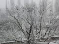 Neve - 24 marzo 2020 (3)