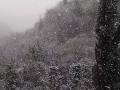 Neve - 24 marzo 2020 (4)