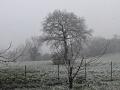 Neve Montignano - 24 marzo 2020