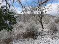 Neve Perugia Burian - 13 febbraio 2021 (3)