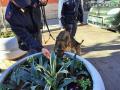 Operazione-antidroga-Gotham-cani-cane-piazza-Solferino-polizia-18-dicembre-2018-1