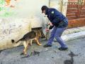 Operazione-antidroga-Gotham-cani-cane-piazza-Solferino-polizia-18-dicembre-2018-10
