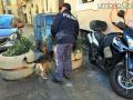 Operazione-antidroga-Gotham-cani-cane-piazza-Solferino-polizia-18-dicembre-2018-11