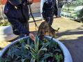 Operazione-antidroga-Gotham-cani-cane-piazza-Solferino-polizia-18-dicembre-2018-6