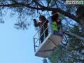 abbattimento alberi albero Lungonera Terni pini pino (FILEminimizer)