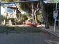 abbattimento alberi albero Lungonera Terni1111 (FILEminimizer)