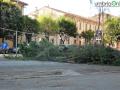 abbattimento alberi albero Lungonera Terni124 (FILEminimizer)