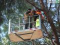 abbattimento alberi albero Lungonera Terni565 pino pini (FILEminimizer)