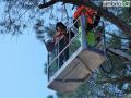 abbattimento alberi albero Lungonera Terni565656 (FILEminimizer)