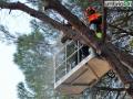 abbattimento alberi albero Lungonera Terni76 (FILEminimizer)