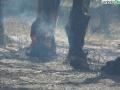 terni incendio campomaggiore cesi (24)