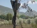 terni incendio campomaggiore cesi (28)