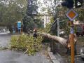 di-vittorio-pastrengo-terni-albero-caduto