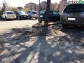 Terni usl2 parcheggio alberi radici buche (1)
