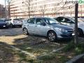 Terni usl2 parcheggio alberi radici buche (12)