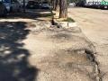 Terni usl2 parcheggio alberi radici buche (7)