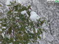 terni neve 26 febbraio 2018 (6)