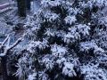 terni neve 26 febbraio (social) (12) - Copia