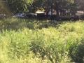 Rifiuti, degrado, sporcizia giardini pubblici via Monterotondo, Terni - 6 maggio 2017 (1)
