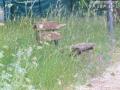 Rifiuti, degrado, sporcizia parco comunale San Carlo, Terni - 6 maggio 2017 (3)