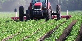 Maltempo e gelate, fondi per agricoltori