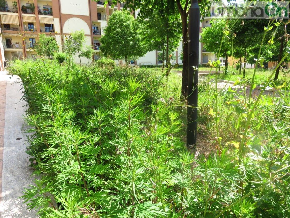 Terni verde pubblico comune chiede aiuto umbriaon - Manutenzione caldaia umbria ...