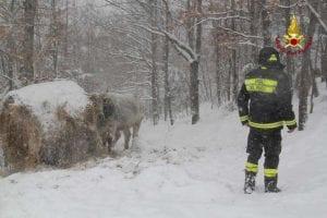 terremoto vigili del fuoco neve