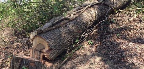 Ficulle, 62enne muore travolto da un albero