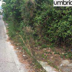 Terni, via Bandiera: «Come nella giungla»