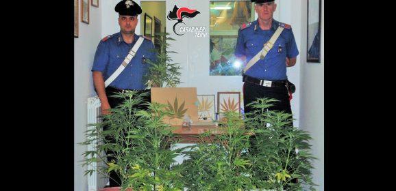 Narni, agricoltore 64enne coltiva droga
